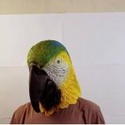 Маска попугая зеленая